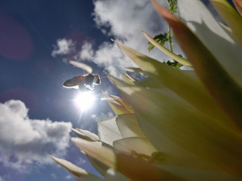 花とミツバチ(1)