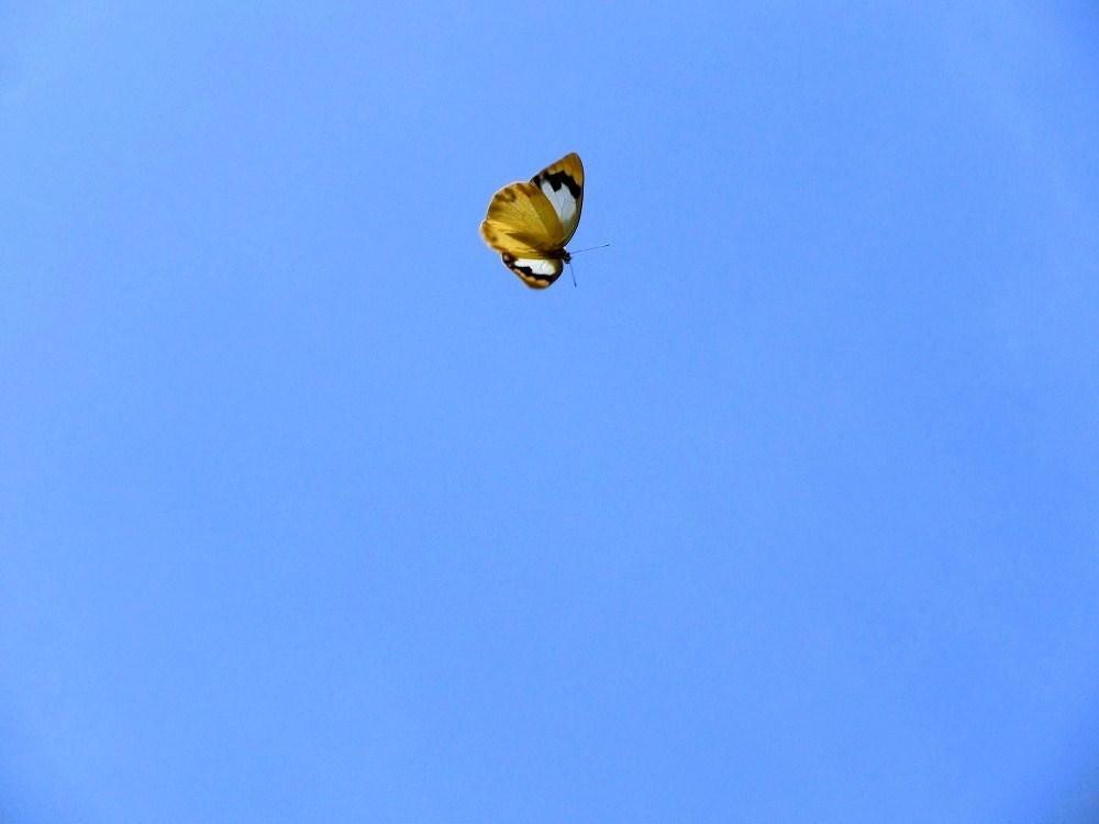青空と蝶(2)