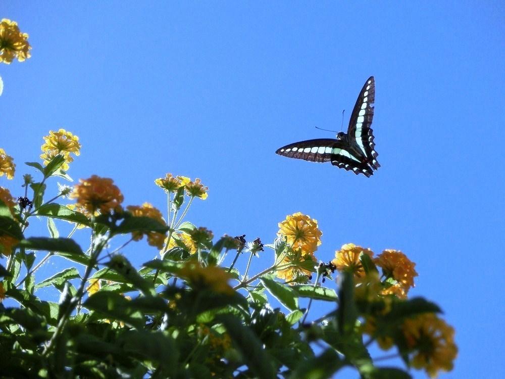 青空と蝶(3)