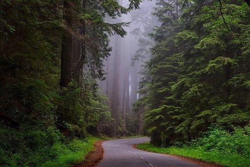 redwood-national-park-1587301__340.jpg