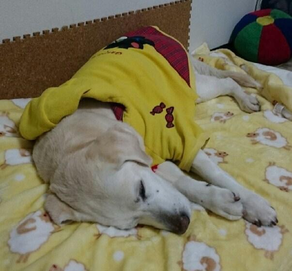 風花、寝んね01