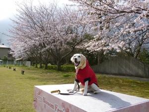 桜並木で-お立ち台-左