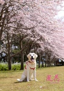 桜と風花♡