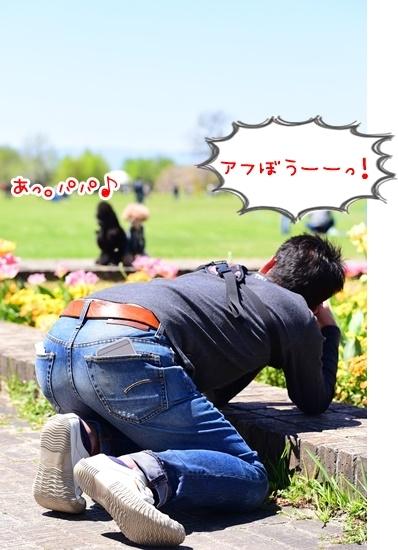 DSC_8219あふぼう