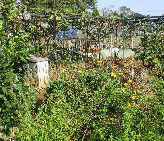 自然との共生菜園1