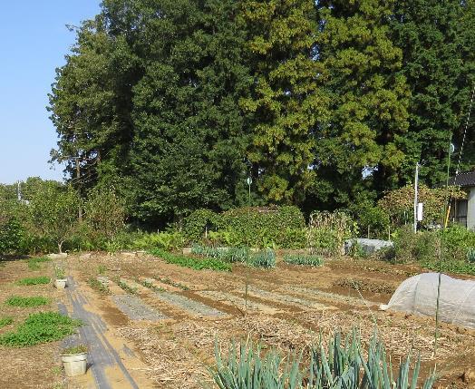 自然との共生菜園2
