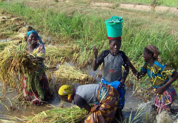 ベナンの水田で働く女性たち