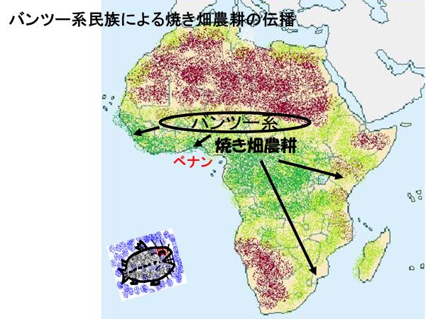 ベナン国とバンツー系民族の焼畑農耕の広がり
