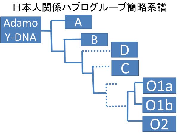 ハプログループ簡略系譜(日本人関係)