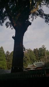 霧島神宮3