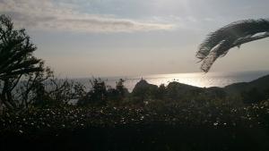 佐多岬展望台からの眺望