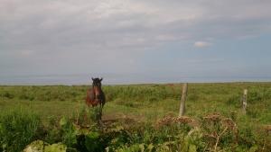 霧多布岬、牧場の馬