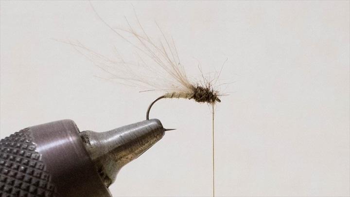 mayfly-immature-0001-006.jpg