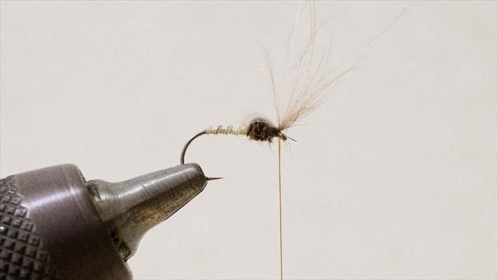 mayfly-immature-0001-008.jpg