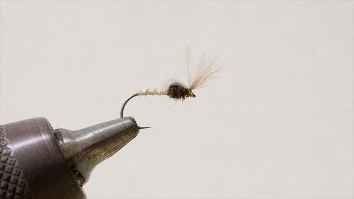 mayfly-immature-0001-010.jpg