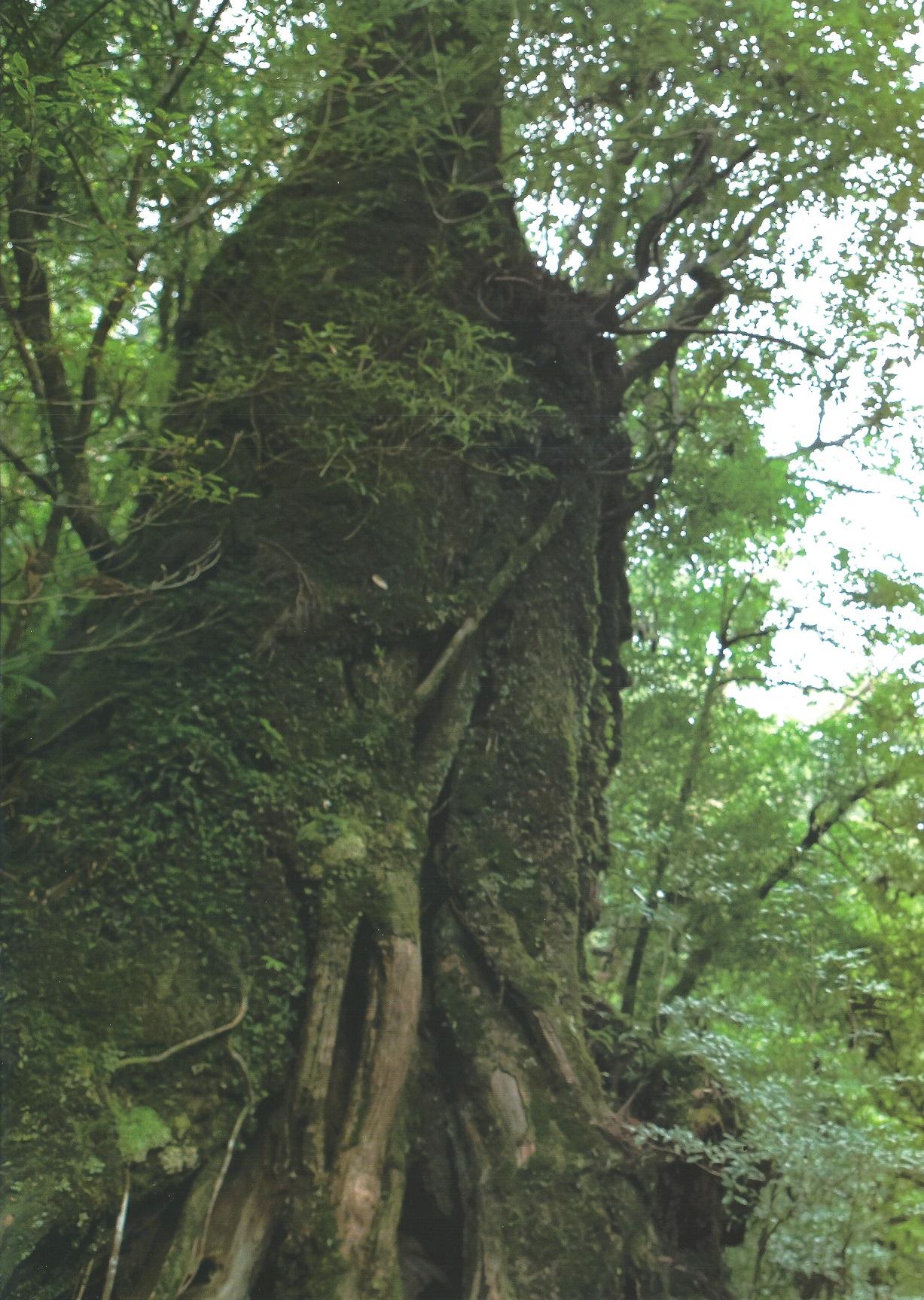 yagamikumi2013011.jpg