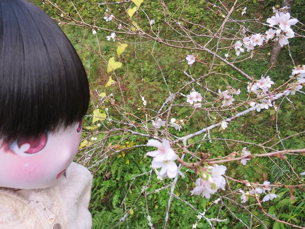IMG_3916 - コピー (2)