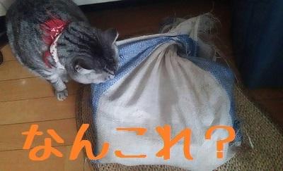 takenoko2.jpg