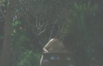 裸になったトエ