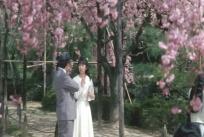 だから、この桜には