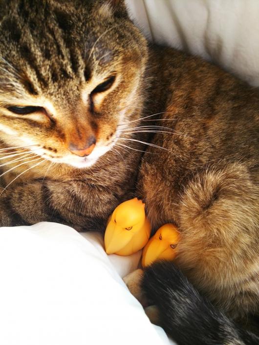 猫とハシビロコウ
