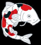 fish_nishikigoi.png