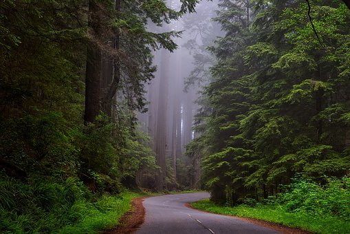 redwood-national-park-1587301__340.jpg